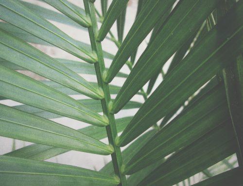 Découvrez nos Palmes du financement – Brève #13